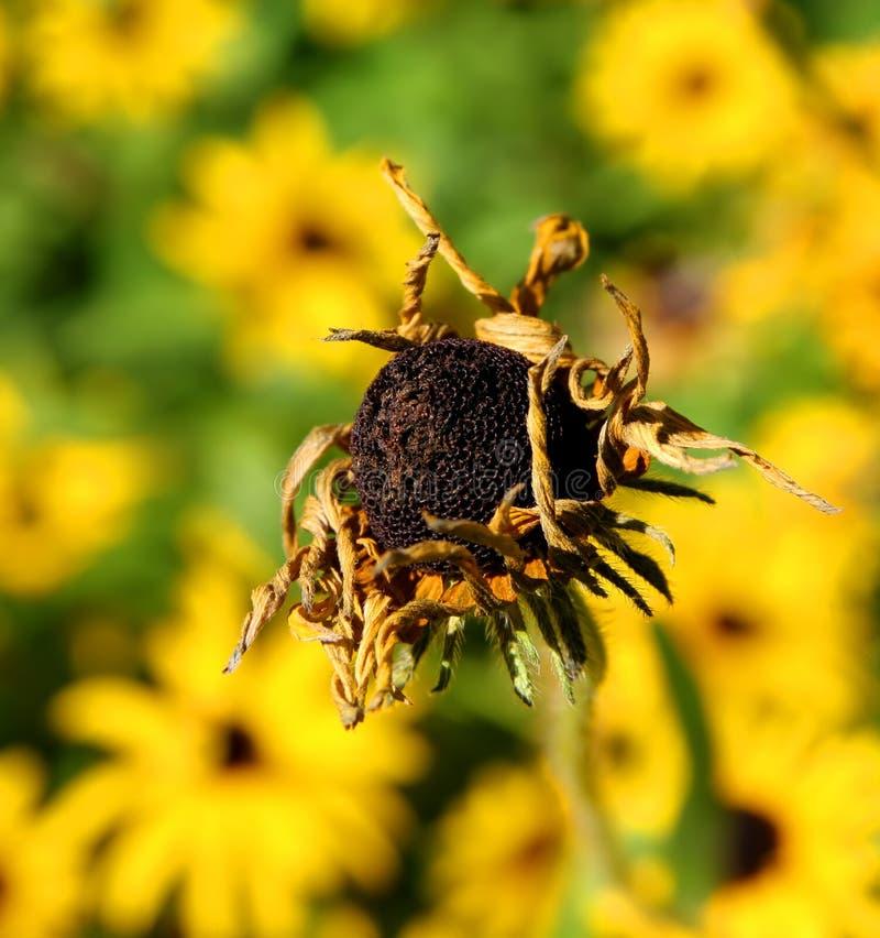 umierający kwiat obrazy stock