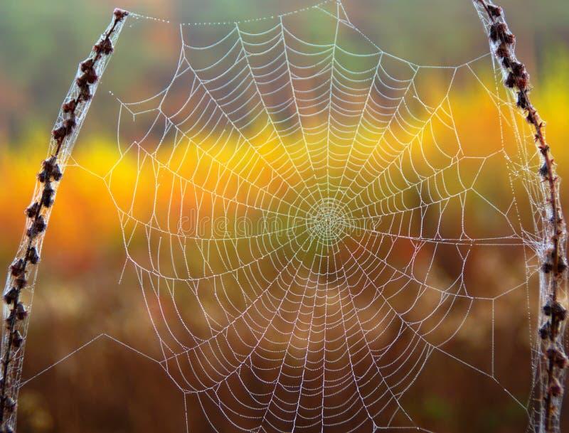 Umore di autunno immagini stock