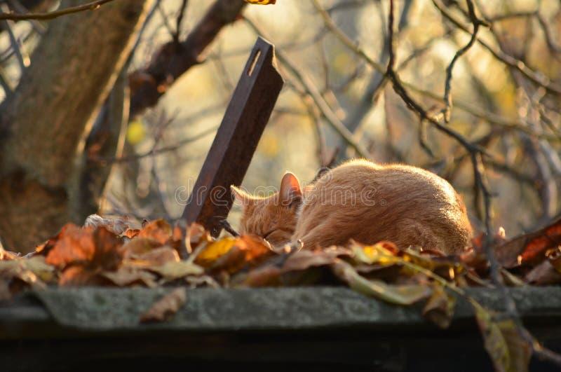 Umore di autunno fotografia stock libera da diritti