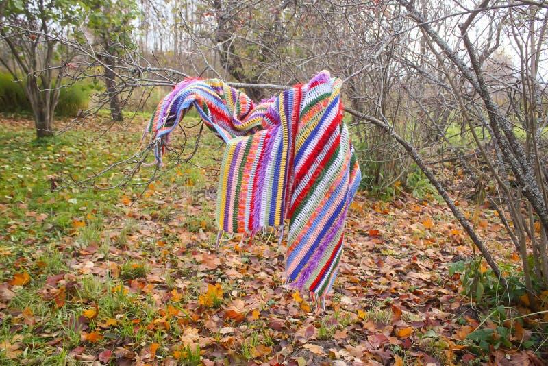 Umore di autunno con le foglie di caduta Plaid a strisce luminoso a quadretti che appende sui rami del cespuglio fotografia stock