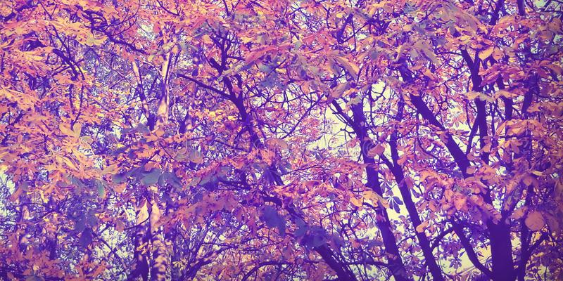 Umore di autunno nella mia foresta fotografia stock libera da diritti