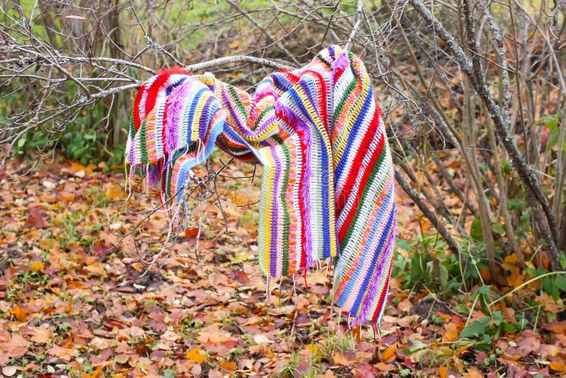 Umore di autunno in parco con le foglie di caduta Plaid a strisce luminoso a quadretti che appende sui rami del cespuglio fotografia stock libera da diritti