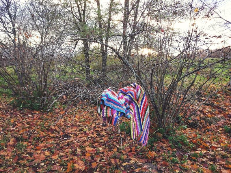 Umore di autunno in un parco con le foglie di caduta fotografia stock libera da diritti