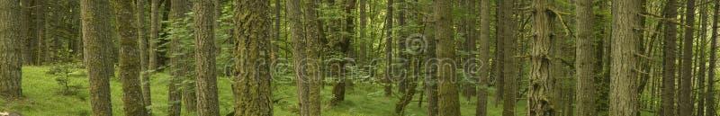 Umweltbaum-Landschaftsfahnen-Panorama lizenzfreies stockfoto
