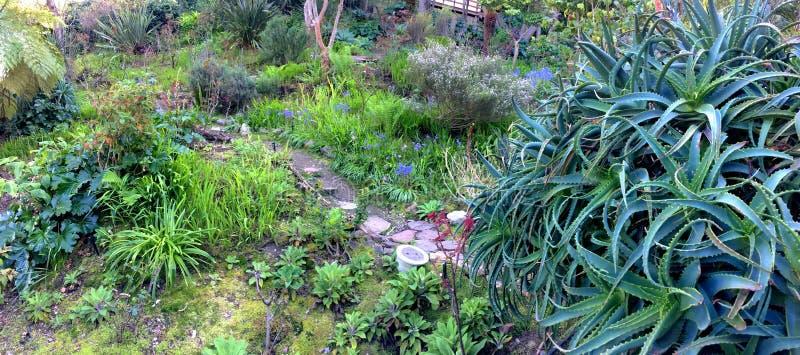 Un áloe que mira sobre una trayectoria y plantaciones del patio trasero imagen de archivo