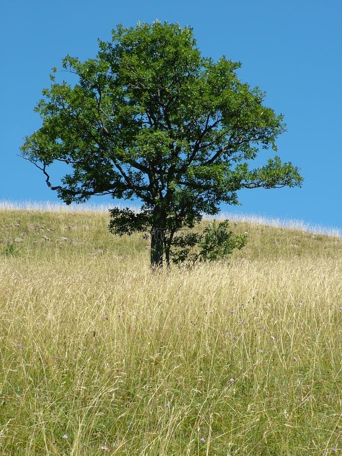 Un árbol fotos de archivo
