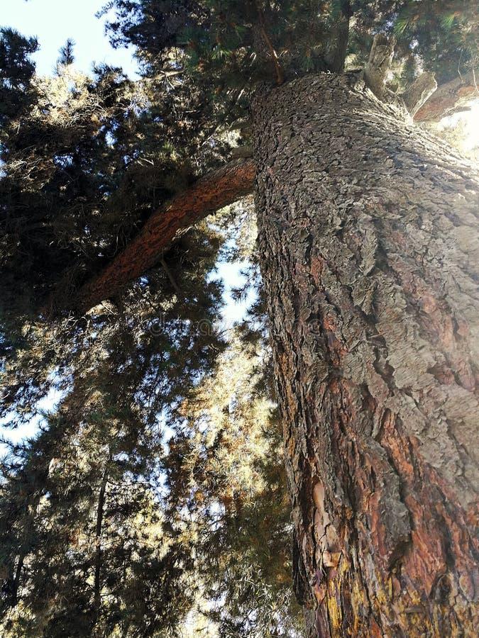 Un árbol imagen de archivo
