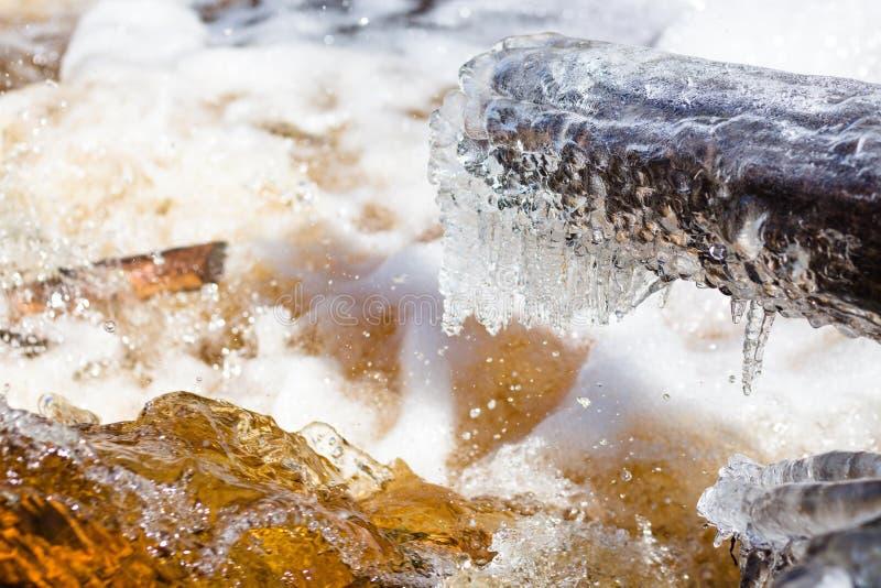 Un árbol caido grande se cubre con una capa de hielo foto de archivo libre de regalías