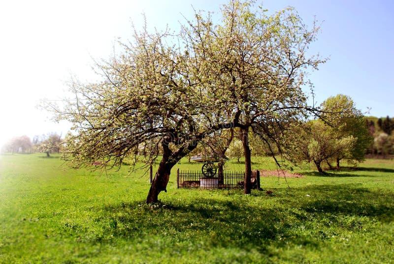 Un árbol cerca de una fuente fotografía de archivo