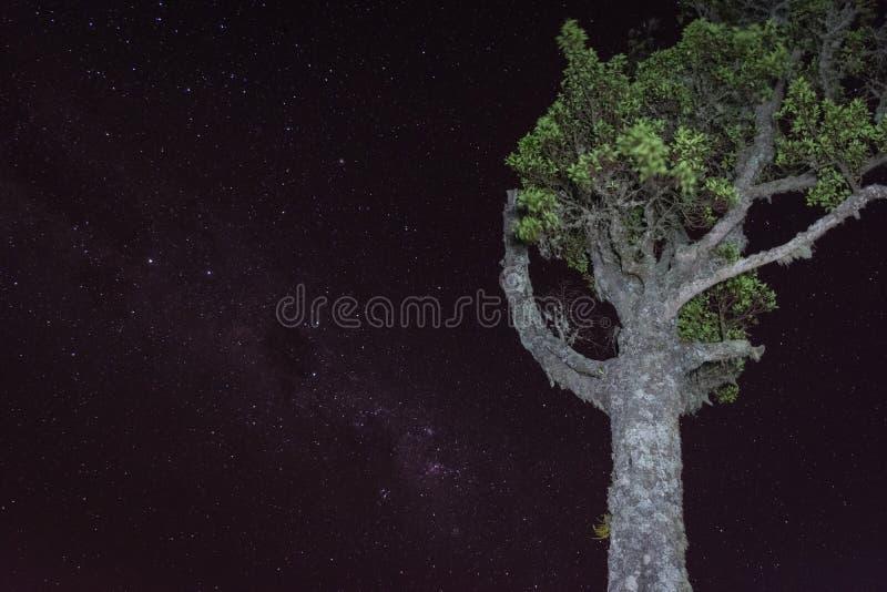 Un árbol con el fondo lleno de estrella en el soporte Raung del sitio para acampar 7 Raung es el más desafiador de los rastros de fotografía de archivo