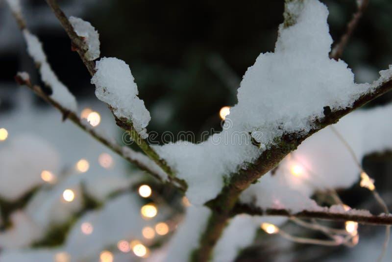 Un árbol con nieve y luces fotos de archivo