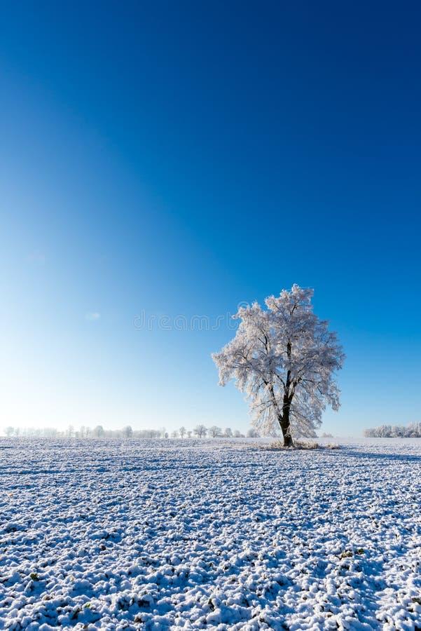 Un árbol congelado en el medio del campo cubierto por la nieve foto de archivo libre de regalías