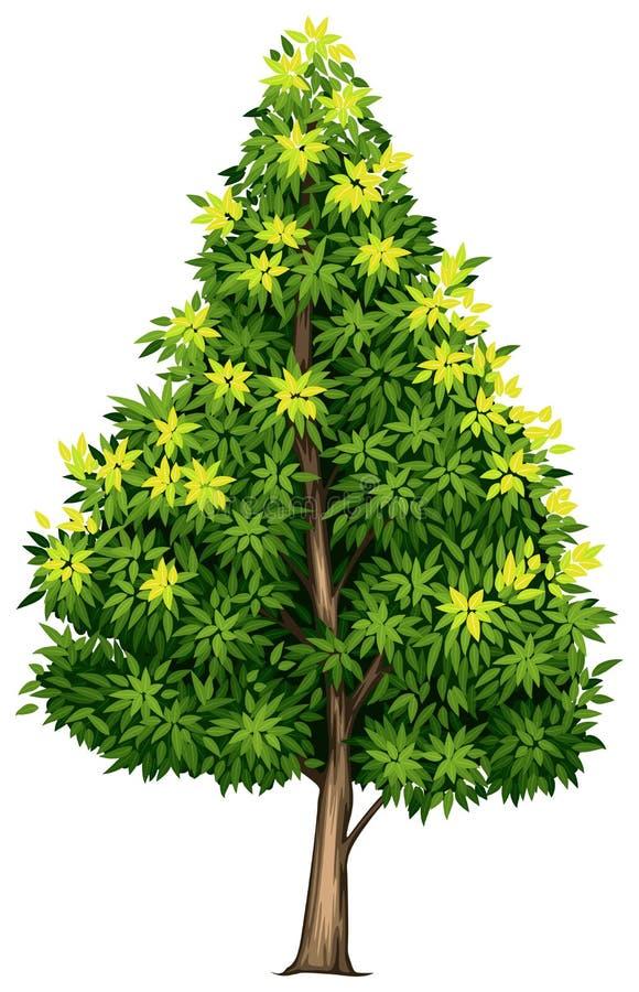 Un árbol de la magnolia meridional stock de ilustración