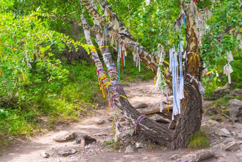 Un árbol del abedul con diversas cintas multicoloras del kyira es fotografía de archivo libre de regalías