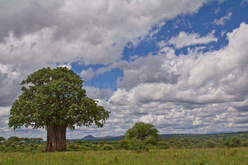 Un árbol del baobab en Tanzania imagen de archivo libre de regalías