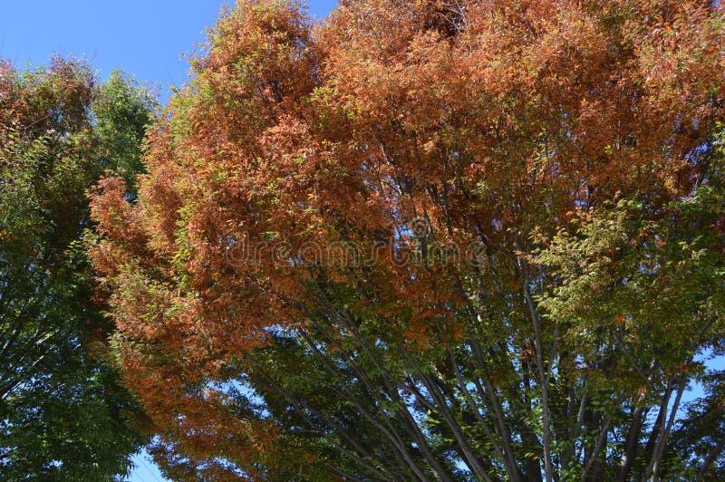 Un árbol del otoño fotografía de archivo