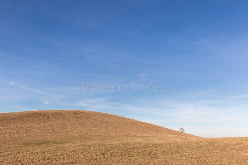 Un árbol distante, solo en una colina desnuda, debajo de un cielo azul con las nubes blancas imagenes de archivo