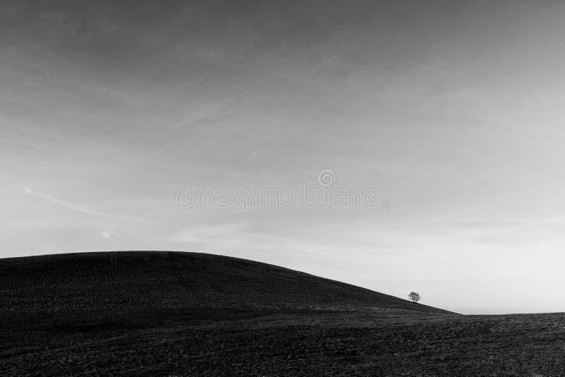 Un árbol distante, solo en una colina desnuda, debajo de un cielo profundo con las nubes blancas foto de archivo libre de regalías