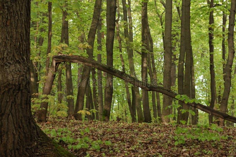 Un árbol en el bosque imagenes de archivo