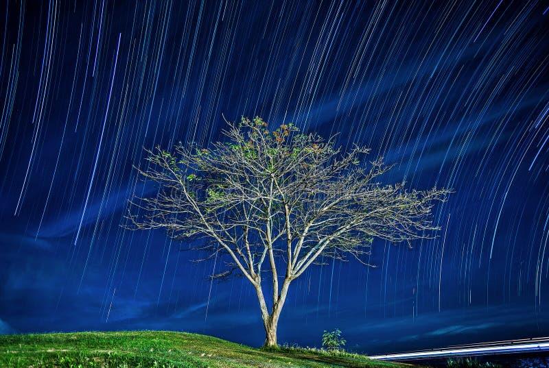 Un árbol en el fondo de una astronomía E Cielo nocturno Estrellas en el cielo nocturno fotografía de archivo libre de regalías