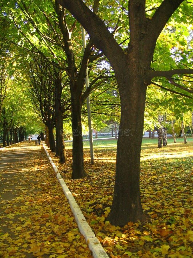 Un árbol en el parque foto de archivo