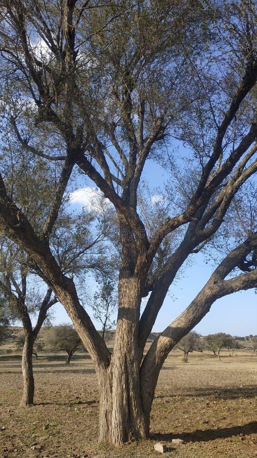 Un árbol en invierno imagenes de archivo