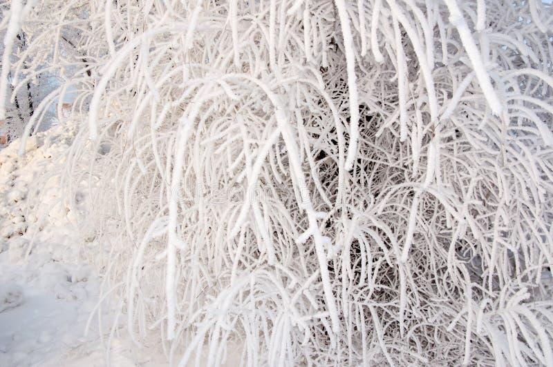 Un árbol en invierno y nieve mullida suave foto de archivo