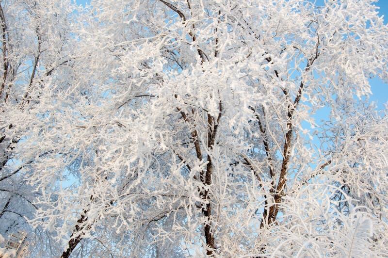 Un árbol en invierno y nieve mullida suave imagen de archivo