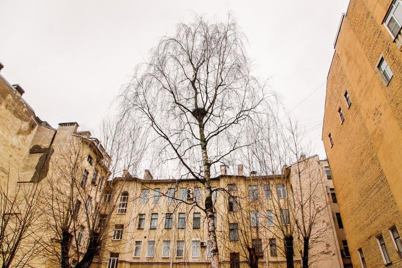 Un árbol en la yarda en el centro de la ciudad fotos de archivo