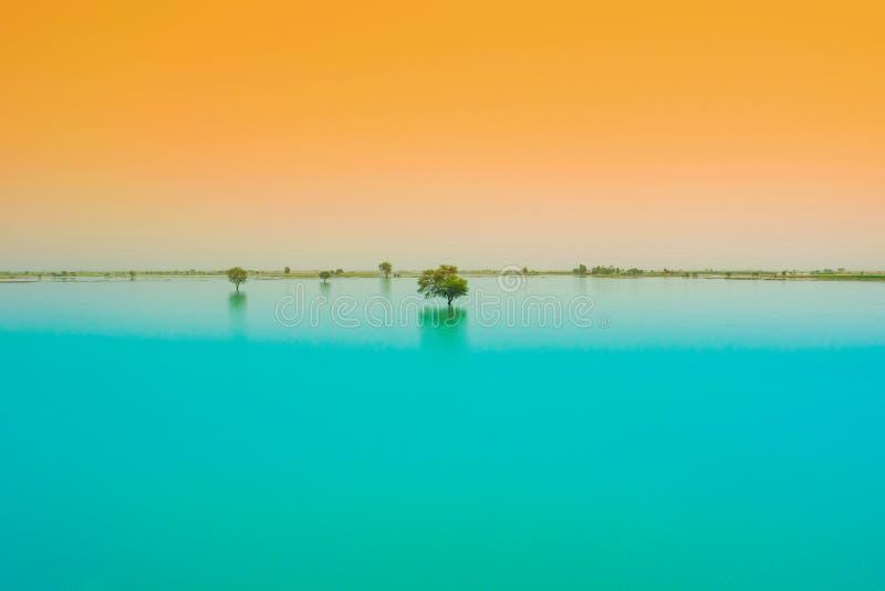 Un árbol en un lago del agua azul con el fondo de la puesta del sol imagen de archivo libre de regalías