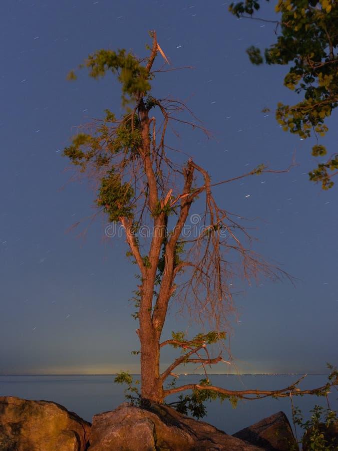 Un árbol en a orillas del lago en la noche temprana fotografía de archivo libre de regalías