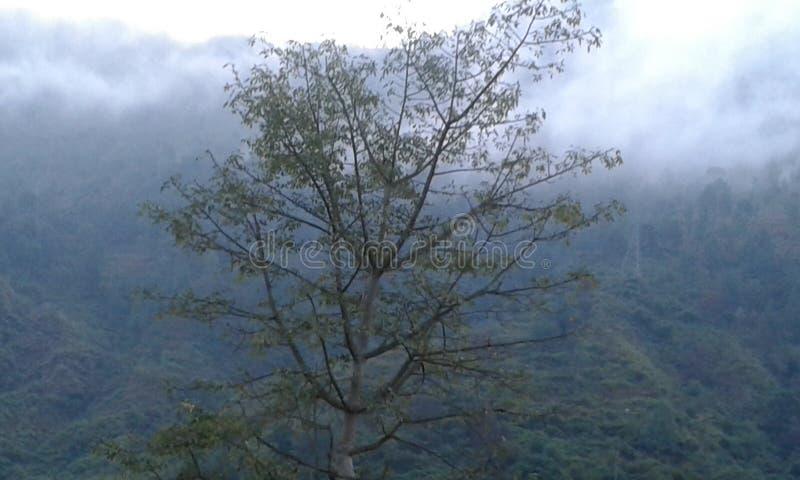 Un árbol en tiempo nublado de niebla en estaciones de la colina imagen de archivo libre de regalías