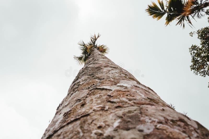 Un árbol exótico alto tirado de un ángulo bajo fotos de archivo libres de regalías