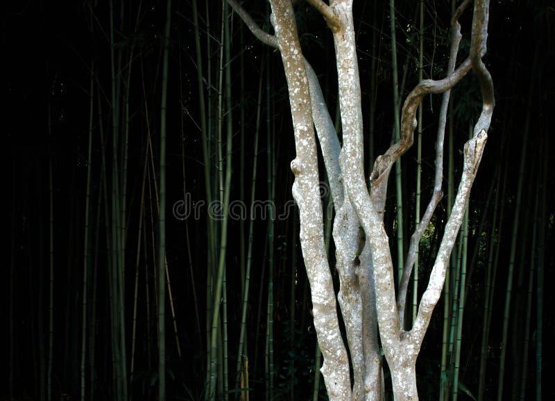 Un árbol fino en un bosque de bambú fotografía de archivo