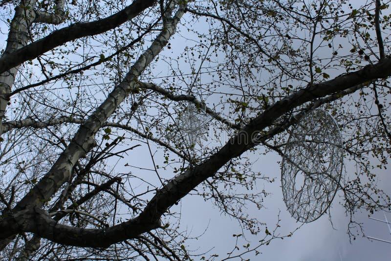 Un árbol grande comenzó a disolver las hojas en primavera En él figuras geométricas de la caída imágenes de archivo libres de regalías