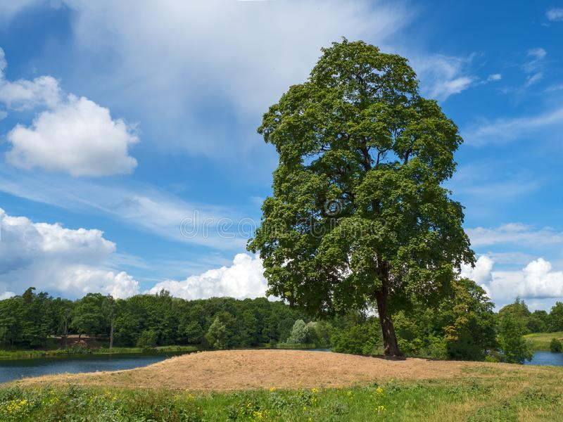 Un árbol grande doblado sobre un césped verde en una colina por el lago imagen de archivo libre de regalías
