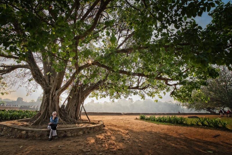 Un árbol grande y una mujer se está sentando debajo para conseguir alguna sombra imagen de archivo