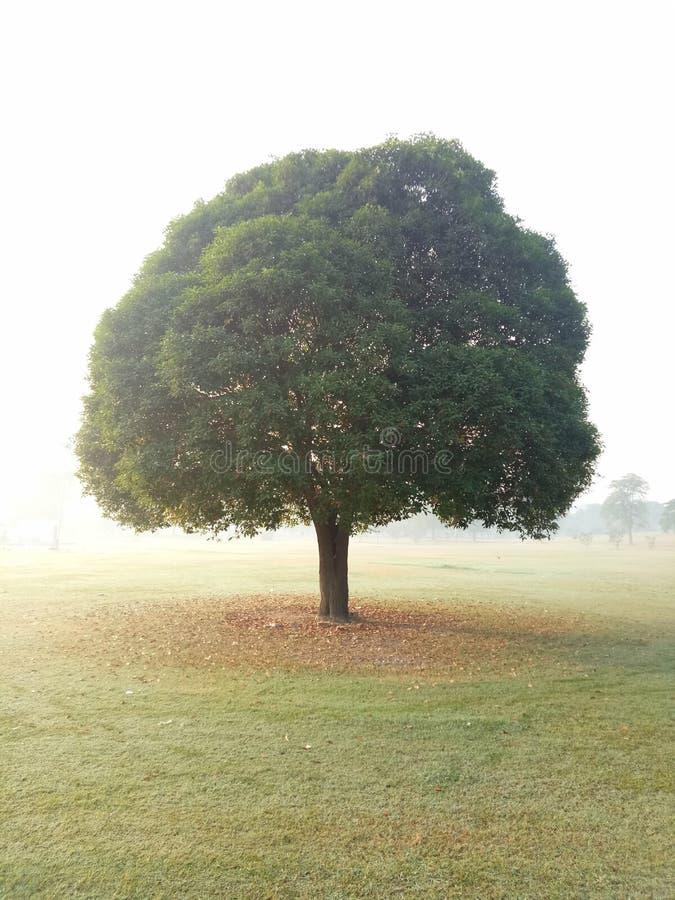 Un árbol hermoso fotografía de archivo libre de regalías