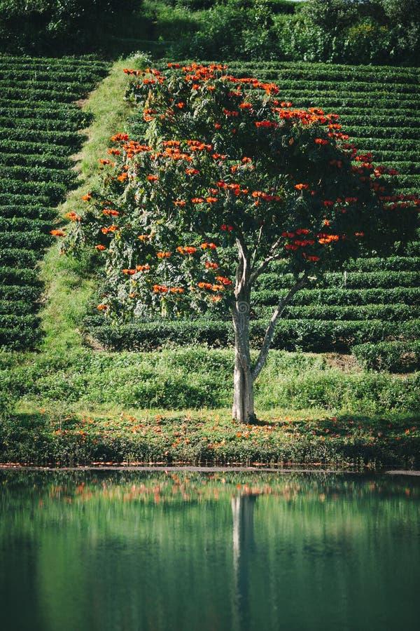 Un árbol hermoso en el lago fotografía de archivo