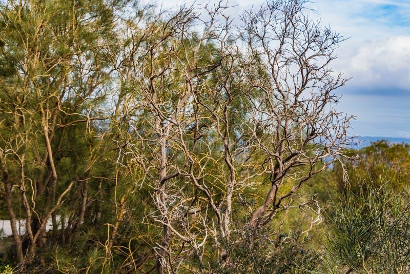 Un árbol marrón rameado fantástico viejo hermoso sin las hojas en un parque en otoño contra el cielo azul con las nubes blancas y imagen de archivo libre de regalías