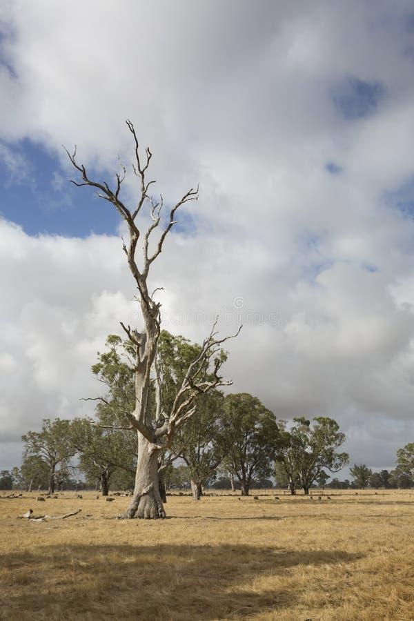 Un árbol muerto en el campo fotos de archivo