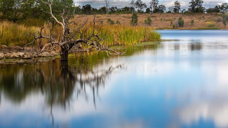 Un árbol muerto en un lago fotos de archivo