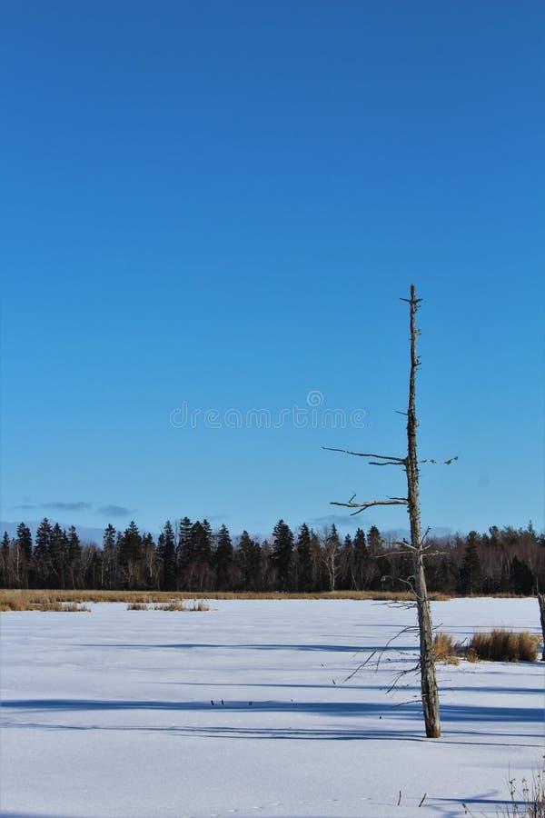 Un árbol muerto en una pequeña charca congelada en el medio del bosque en un área pantanosa de Nova Scotia en invierno imagen de archivo