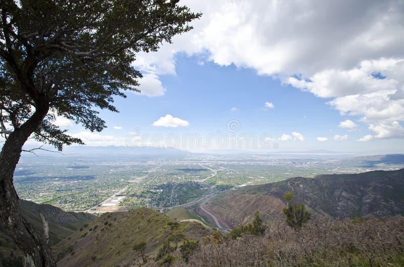Un árbol sobre el valle de Salt Lake City fotos de archivo libres de regalías