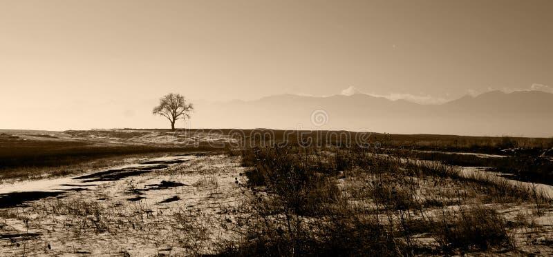 Un árbol solitario fotografía de archivo libre de regalías