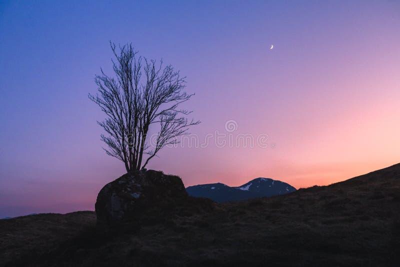 Un árbol solitario crece en una roca en Glencoe, Escocia en la hora azul con una luna de la astilla en el cielo colorido fotos de archivo