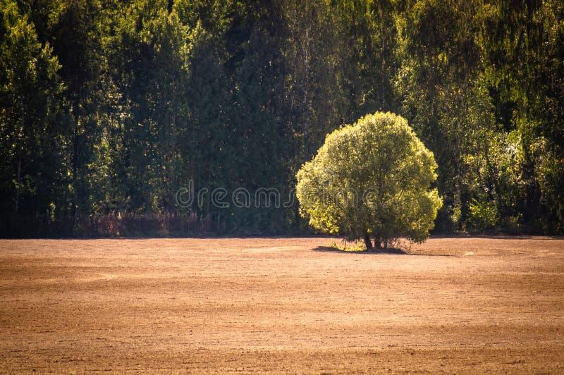 Un árbol solitario en un campo arado imágenes de archivo libres de regalías