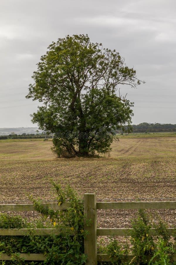 Un árbol solitario en un campo Derbyshire fotos de archivo