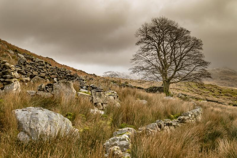 Un árbol solitario en Llyn Dywarchen en el parque nacional de Snowdonia foto de archivo