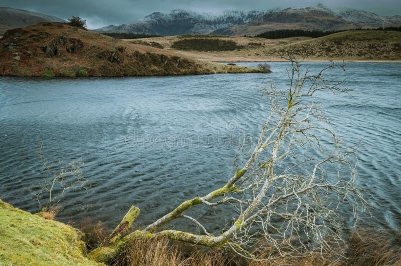 Un árbol solitario penetra en el agua en Llyn Dywarchen en el parque nacional de Snowdonia fotos de archivo libres de regalías